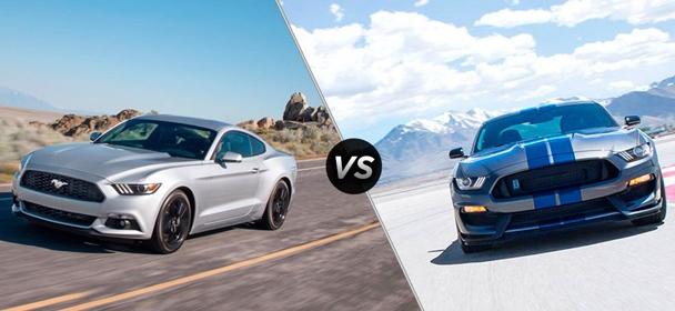 Mustang GT5.0 vs GT500 SHELBY